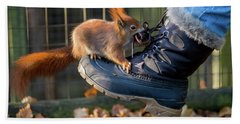 Squirrel On Boot  Beach Towel