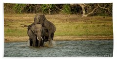 Sri Lankan Elephants  Beach Towel