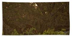 Sri Lankan Leopard And Wild Boar Beach Sheet