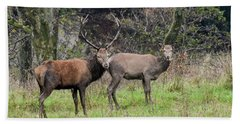 Stag And Doe  Beach Towel