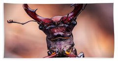 Stag Beetle Stare Down Beach Towel