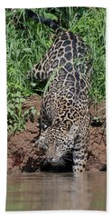 Stalking Jaguar Beach Towel
