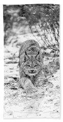 Stalking Lynx Beach Towel