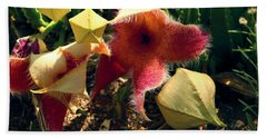 Starfish Of The Desert Beach Towel