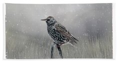 Starling In Winter Beach Towel