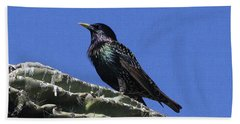 Starling On Saguaro Arm Beach Sheet by Tom Janca