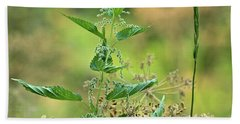 Beach Towel featuring the photograph Stinging Nettle by Ann E Robson