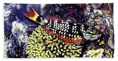 Beach Towel featuring the photograph Stoplight Parrotfish Initial Phase by Perla Copernik