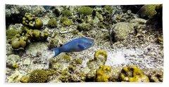 Beach Towel featuring the photograph Stoplight Parrotfish  by Perla Copernik