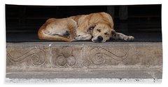 Beach Towel featuring the photograph Street Dog Sleeping On Steps by Karen Zuk Rosenblatt