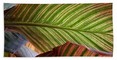 Striped Canna Lily Leaves Beach Sheet