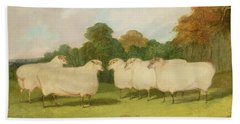 Study Of Sheep In A Landscape   Beach Sheet by Richard Whitford