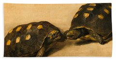 Study Of Two Brazilian Tortoises Beach Towel