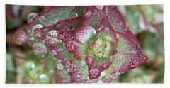 Succulent Abstract Beach Towel by Russell Keating