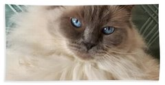 Sugar My Ragdoll Cat Beach Sheet