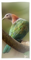Sulawesi Green Imperial Pigeon Beach Towel