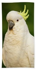 Sulphur Crested Cockatoo Beach Towel by Craig Dingle
