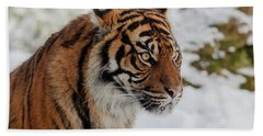 Sumatran Tiger In The Snow Beach Towel