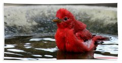 Summer Tanager In Bird Bath Beach Sheet