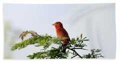 Beach Towel featuring the photograph Summer Tanager In Mesquite Scrub by Robert Frederick