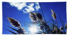 Sunburst Reeds Beach Sheet