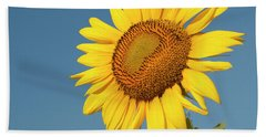 Sunflower And Blue Sky Beach Towel by Phyllis Peterson