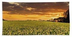 Sunflower Fields Sunset Beach Sheet