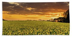Sunflower Fields Sunset Beach Towel