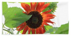 Sunflower In The Afternoon Beach Towel