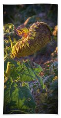 Sunflower Repose Beach Towel