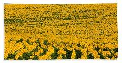 Sunflowers Galore Beach Sheet by Catherine Sherman