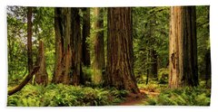 Beach Towel featuring the photograph Sunlight In The Redwoods by James Eddy