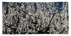 Sunlit Apricot Blossoms Beach Sheet by Will Borden