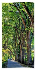 Beach Towel featuring the photograph Sunlit Path by Gina Savage