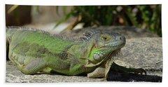 Sunning Green Iguana On A Rock Ledge Beach Towel by DejaVu Designs