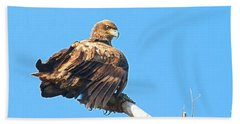 Beach Sheet featuring the photograph Sunning Out On A Limb by Debbie Stahre
