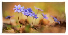 Beach Towel featuring the photograph Sunny Afternoon With Liverworts by Jaroslaw Blaminsky