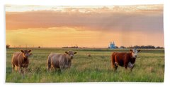 Sunset Cattle Beach Towel