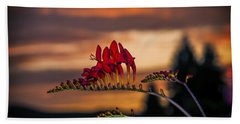 Sunset Crocosmia Beach Towel