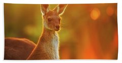 Beach Sheet featuring the photograph Sunset Joey, Yanchep National Park by Dave Catley