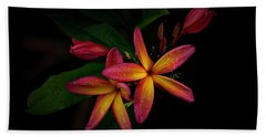 Sunset Plumerias In Bloom #2 Beach Towel