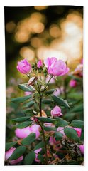 Beach Towel featuring the photograph Sunset Roses by Parker Cunningham