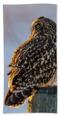 Sunset Short-eared Owl Beach Towel