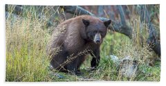 Surprised Bear Beach Sheet by Scott Warner