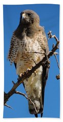 Swainson's Hawk Beach Towel