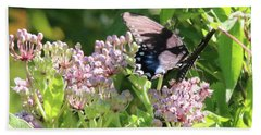 Female American Swallowtail Papilio Polyxenes Beach Towel