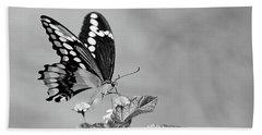 Swallowtail Beach Sheet