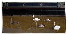 Swan Family Swimming Along The Bridgewater Canal Worsley Salford Greater Manchester England Beach Towel