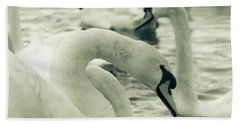Swan In Water Beach Towel