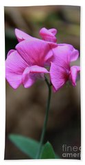 Sweet Pea Of Strawberry Creek Beach Towel by Suzanne Oesterling